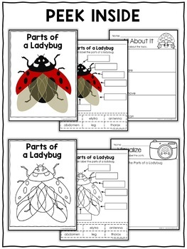 Parts of a Ladybug Activities