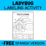 Parts of a Ladybug Activity