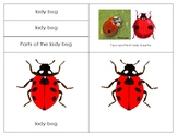 Parts of a Ladybug- Montessori  Lesson