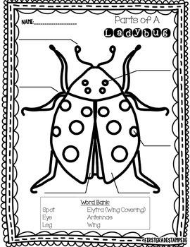 Parts of a Ladybug FREEBIE
