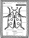Parts of a Ladybug FREEBIE