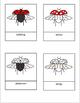 Parts of a Ladybug Work Three Part Cards Montessori Preschool