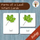Parts of a Leaf Montessori 3-Part Cards