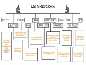 Parts of a Light Microscope Function Tree Diagram FREEBIE