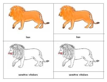 Parts of a  Lion - Montessori - Three Part Cards