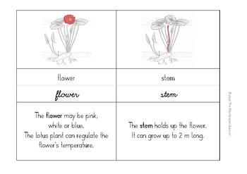 Parts of a Lotus