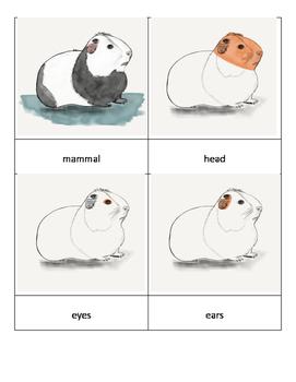 Parts of a Mammal