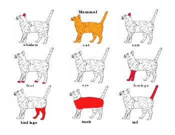Parts of a Mammal: Cat