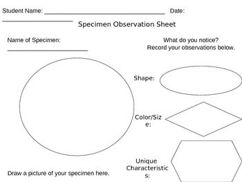 Parts of a Microscope Information Sheets with Formative Assessment