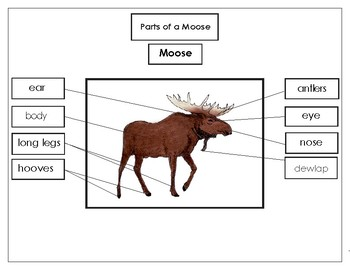 Printables:  Label the Parts of a Moose