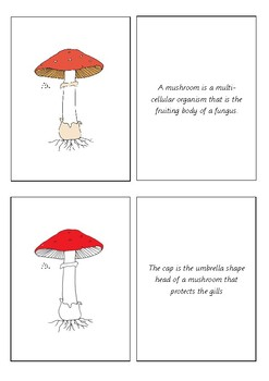 Parts of a Mushroom Booklet