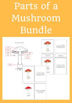 Parts of a Mushroom Bundle