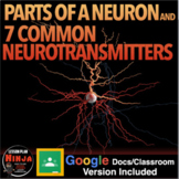 Parts of a Neuron and 7 Common Neurotransmitters Worksheet (Psychology)