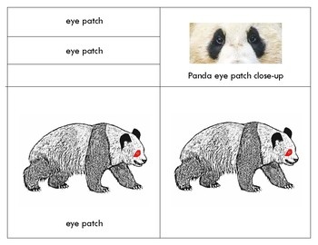 Parts of a  Giant Panda -Three Part Cards