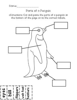 Parts of a Penguin