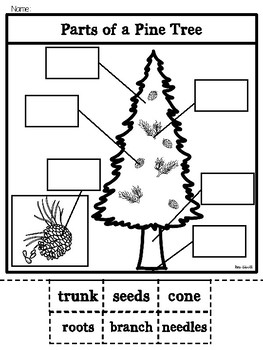 Parts of a Pine Tree-Bilingual
