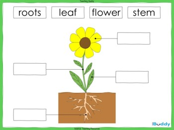 The Parts of a Plant