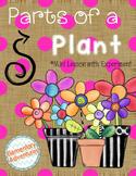 Plants: Parts of a Plant Experiment