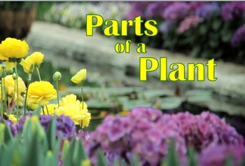 Parts of a Plant Video Bundle -Video,Craft,ppt.,Worksheet,Quiz,Bellringer