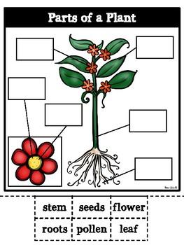 Parts of a Plant-Bilingual
