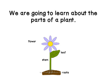 Parts of a Plant: Adapted Book