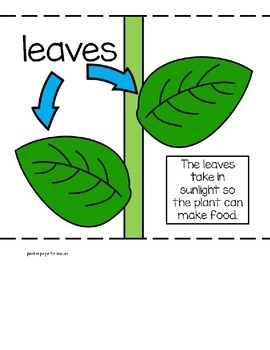 Labeling Parts of a Plant Anchor Chart and Interactive Science Activity