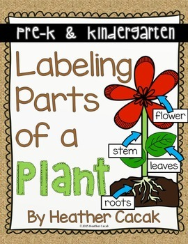 Labeling Parts of a Plant Anchor Chart and Interactive Sci