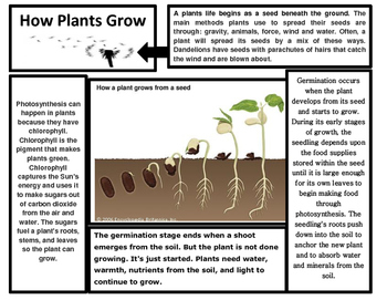 Parts of a Plant Articles (2)