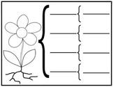 Parts of a Plant Brace Map