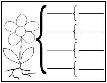 parts of a plant brace map by mrs koz teachers pay teachers