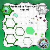 Parts of a Plant Cell: Clip Art
