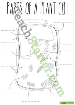 Parts of a Plant Cell Poster and Worksheets