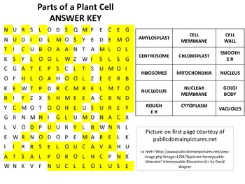 Parts of a Plant Cell Word Search