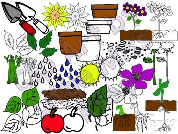 Parts of a Plant Clip Art