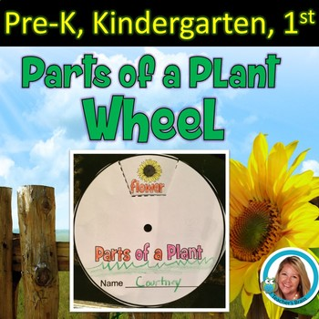 Parts of a Plant Craft - Wheel