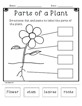 Parts of a Plant Cut and Paste Activity