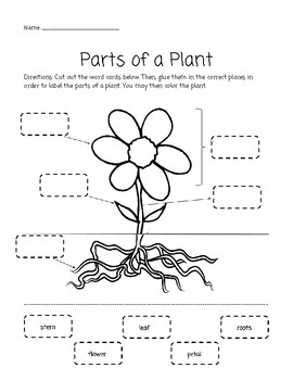 parts of a plant cut and paste activity by elizabeth kelley tpt. Black Bedroom Furniture Sets. Home Design Ideas