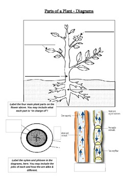 Parts of a Plant Diagram