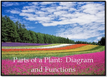 Parts of a Plant:  Diagram and Functions