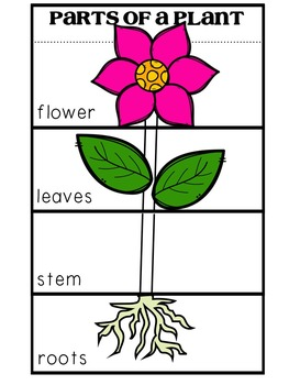 Parts of a Plant Flip Book by Tanya Grady | Teachers Pay ...