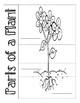 Parts of a Plant Flipbook!