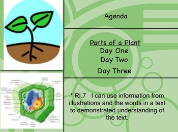 Parts of a Plant Flipchart- Gr. 3