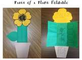Parts of a Plant Foldable