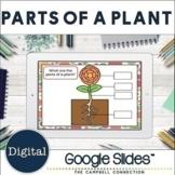 Parts of a Plant Google Classroom
