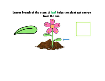 Parts of a Plant Interactive Book
