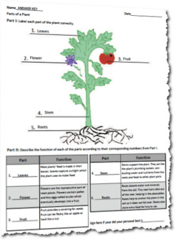 Parts of a Plant - Label and Describe Project