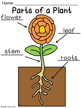 Parts of a Plant Labeling