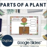 Parts of a Plant Labeling Google Classroom