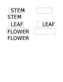 Parts of a Plant Labels
