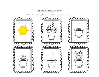 Parts of a Plant Life Cycle Cards